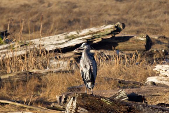 Heron Richmond